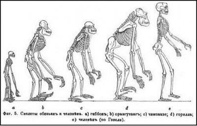 антропология,творение,человек,создание,бог,творец,эволюция,христианин,человек