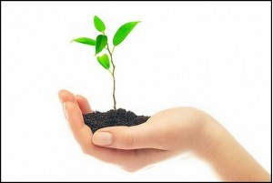 эволюция, вид, животный, мутация, растение, тип, материал, генетический, изменение, бабочка