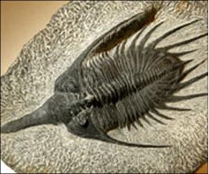 эволюция,дарвин,теория,кембрийский,взрыв
